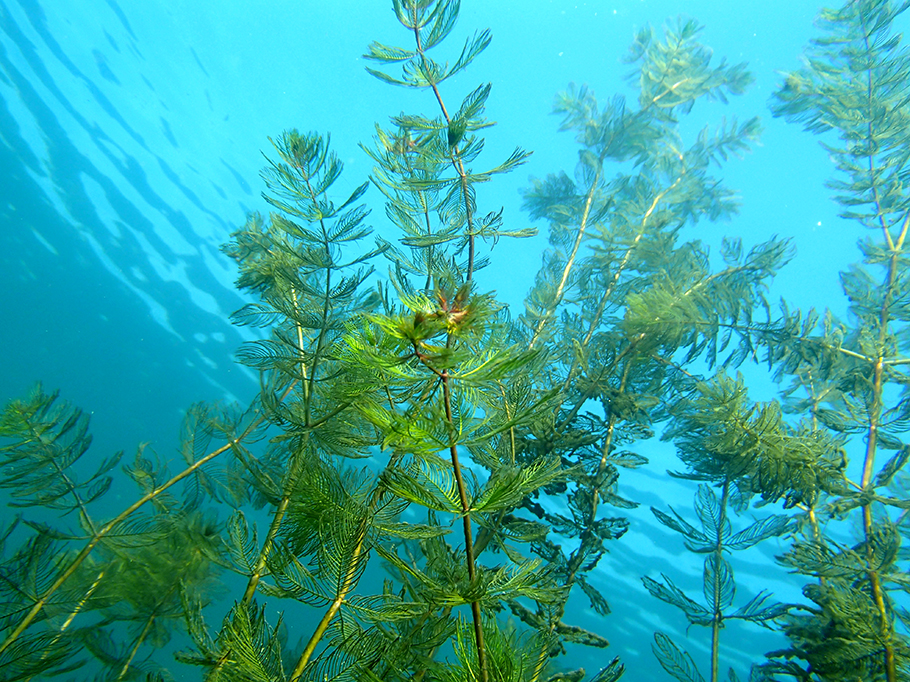 Takmičenje u podvodnoj fotografiji