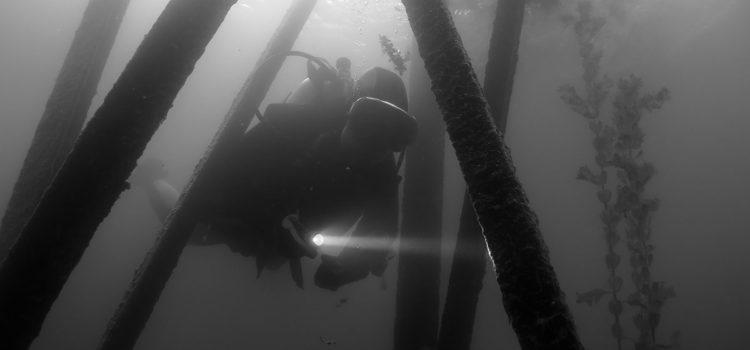 Takmičenje u podvodnoj fotografiji, Bela Crkva 2017