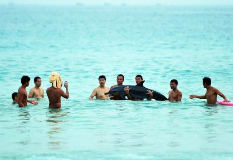 Turisti držali delfina 30 minuta van vode da bi se slikali sa njim