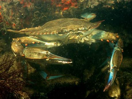 Kraba 2