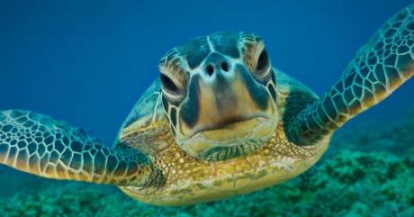 morksa kornjaca 1