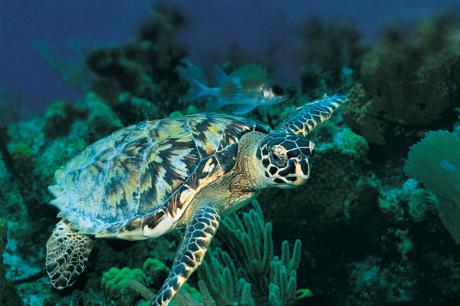 morksa kornjaca 3