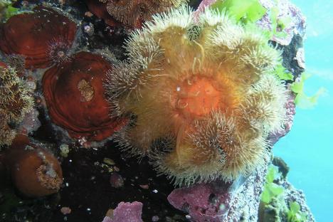Вода око Монерона је сан сваког подводног фотографа. Прозирна је као најчистији кристал.