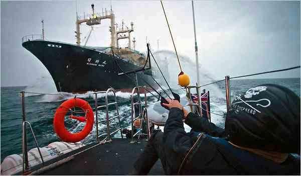 whaling-sea-shepherd-action-shot